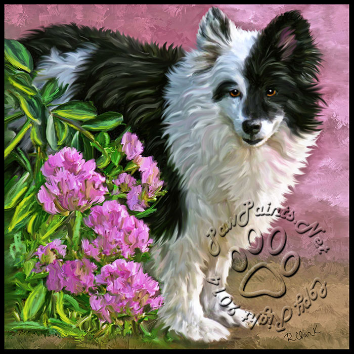 Paw Paints can paint dogs, especially beautiful border collies